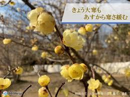 f:id:koushuya:20210303120255j:plain