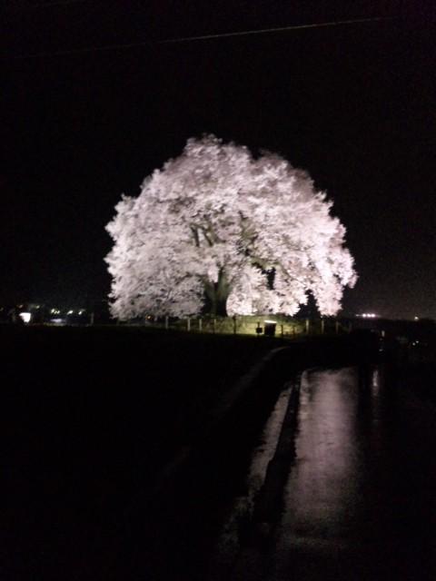 f:id:koushuya:20210402053646j:plain