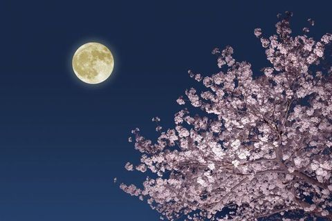 f:id:koushuya:20210430234925j:plain