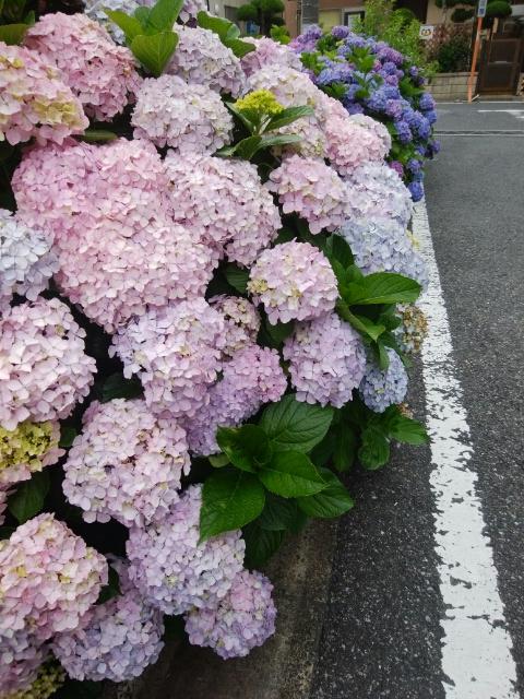f:id:koushuya:20210608233854j:plain
