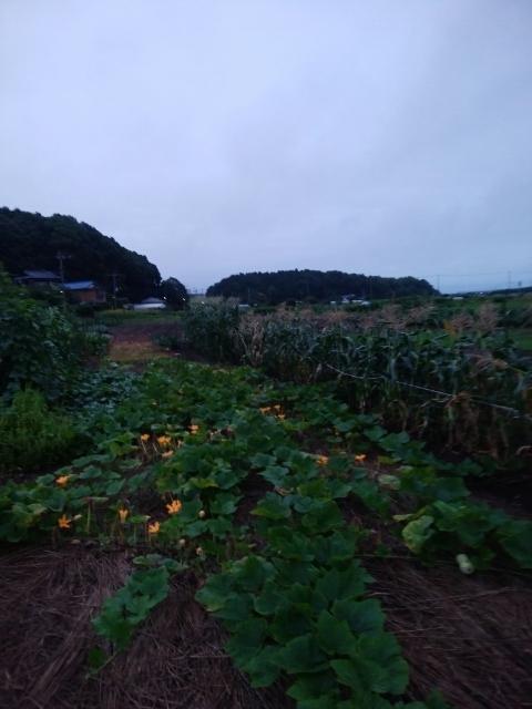 f:id:koushuya:20210725002054j:plain