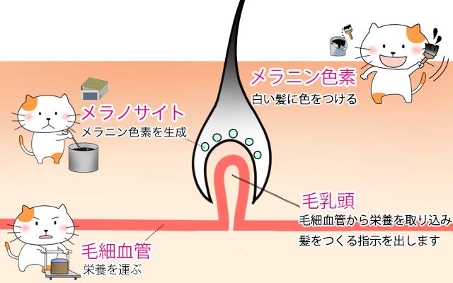 f:id:kousuke_inui:20190213133721p:plain