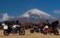 富士山! 御殿場 やまぼうしキャンプ場。