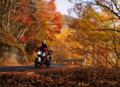[KTM][690DUKE][バイクのある風景][紅葉][キャンプ][キャンプツーリング]  秋の紅葉キャンプツーリング!(しらびそ峠)
