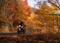 秋の紅葉キャンプツーリング!(しらびそ峠)