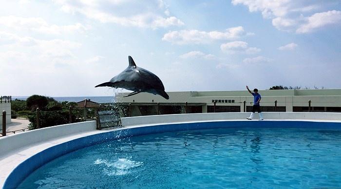 イルカラグーンでジャンプするイルカ