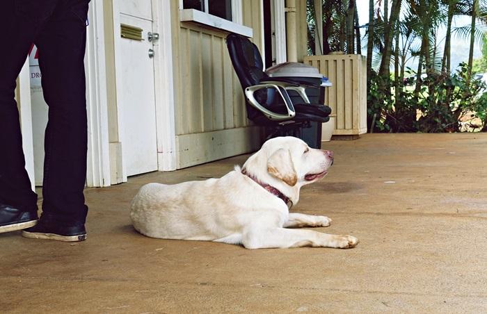 サンシャインヘリコプターズの看板犬