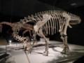[恐竜][化石]