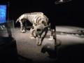 [恐竜][古生物][化石]