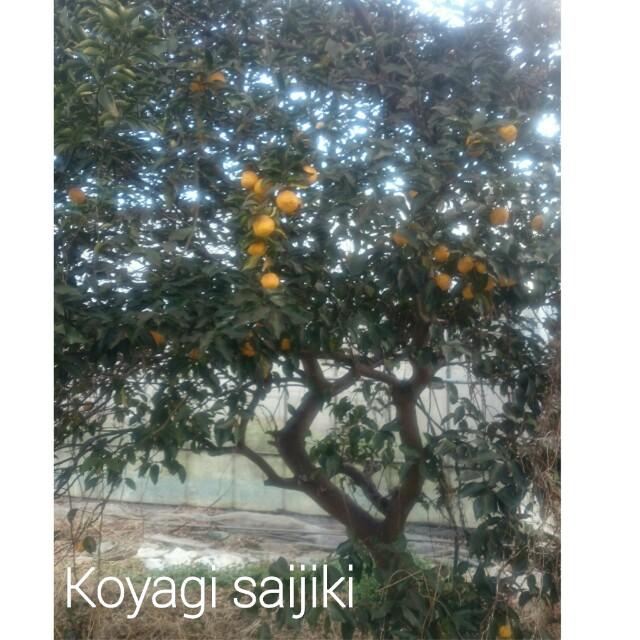 f:id:koyagi-saijiki:20170205163457j:image