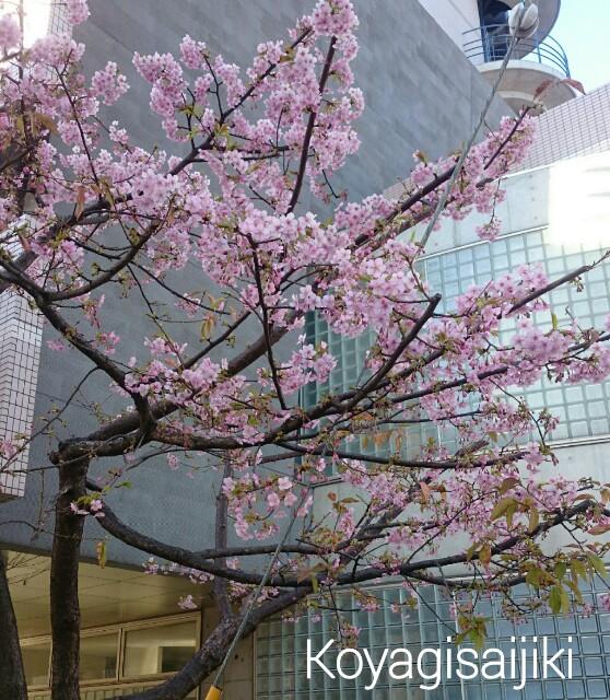 f:id:koyagi-saijiki:20170215192150j:image