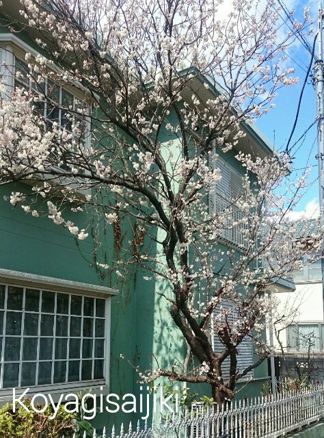 f:id:koyagi-saijiki:20170316180652j:image