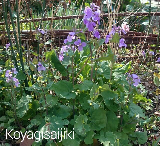 f:id:koyagi-saijiki:20170320141956j:image