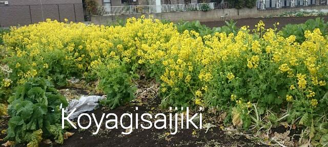 f:id:koyagi-saijiki:20170322145633j:image