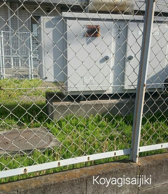 f:id:koyagi-saijiki:20170325195443j:image