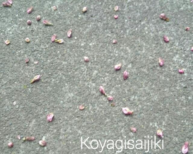 f:id:koyagi-saijiki:20170328190742j:image
