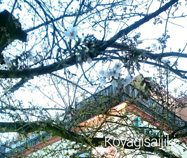 f:id:koyagi-saijiki:20170402180806j:image