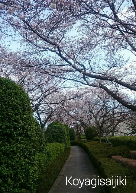 f:id:koyagi-saijiki:20170406235734j:image