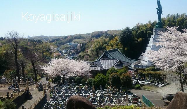 f:id:koyagi-saijiki:20170415172241j:image