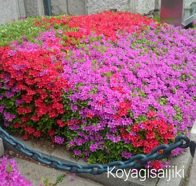 f:id:koyagi-saijiki:20170419145622j:image