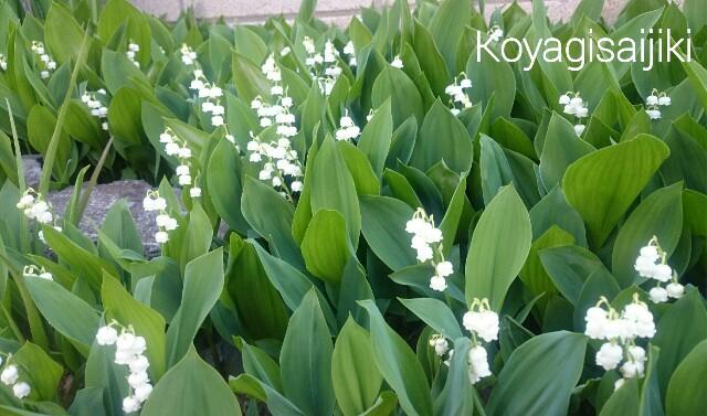 f:id:koyagi-saijiki:20170428164644j:image