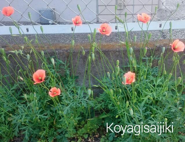 f:id:koyagi-saijiki:20170506194119j:image