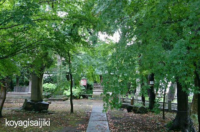 f:id:koyagi-saijiki:20170601235130j:image