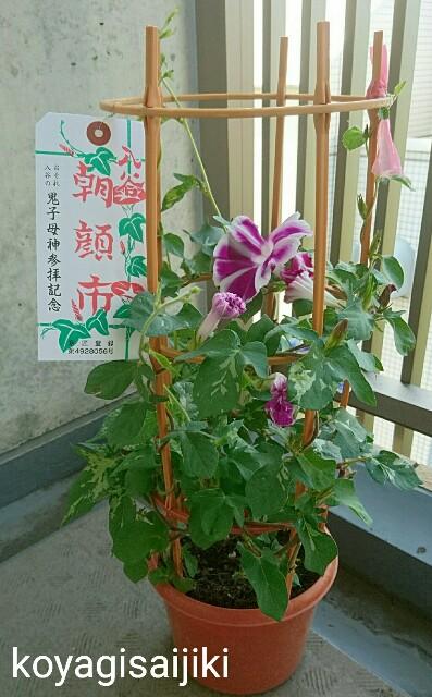f:id:koyagi-saijiki:20170708091334j:image