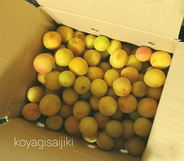 f:id:koyagi-saijiki:20170709111610j:image