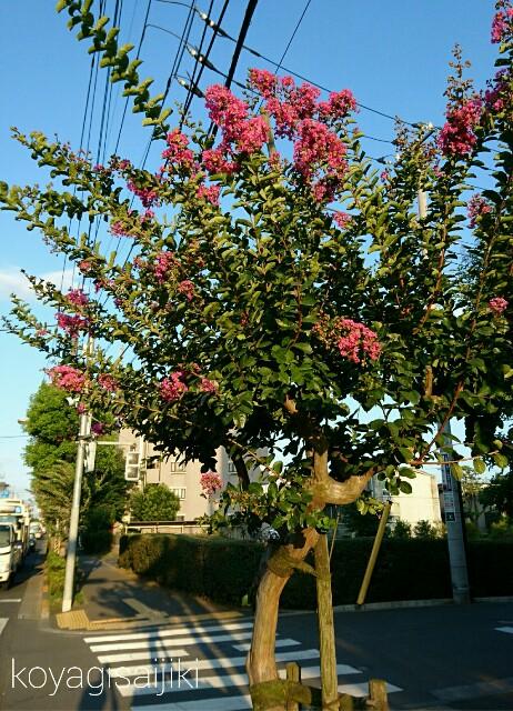 f:id:koyagi-saijiki:20170721192805j:image