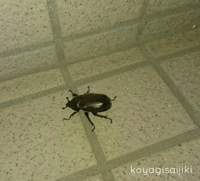f:id:koyagi-saijiki:20170808134725j:image
