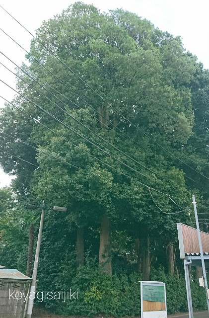 f:id:koyagi-saijiki:20171025180828j:image