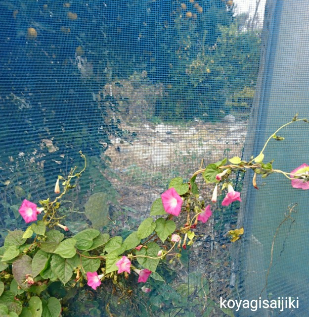 f:id:koyagi-saijiki:20171201181404j:image