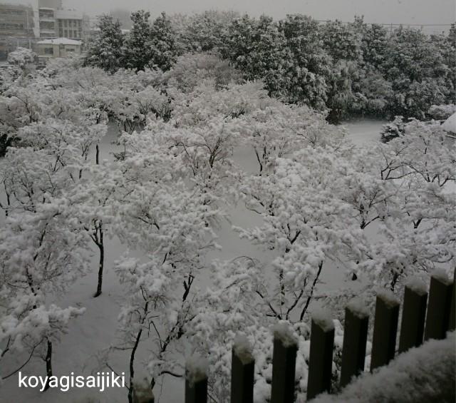 f:id:koyagi-saijiki:20180124161429j:image