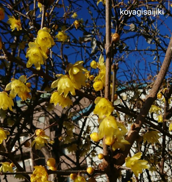 f:id:koyagi-saijiki:20180207155035j:image