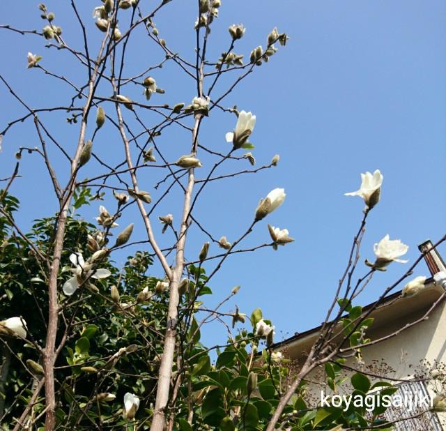 f:id:koyagi-saijiki:20180314121740j:image