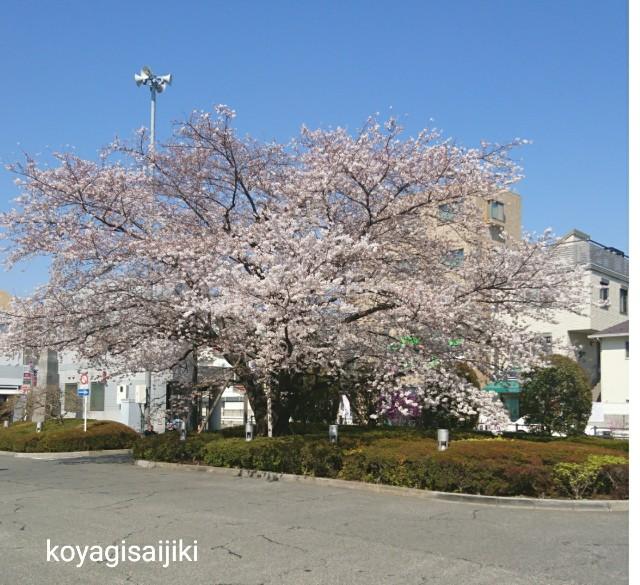 f:id:koyagi-saijiki:20180325132759j:image
