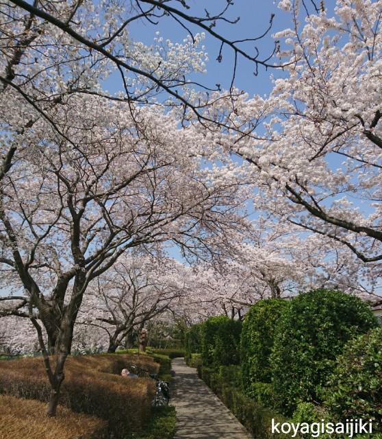 f:id:koyagi-saijiki:20180330174013j:image