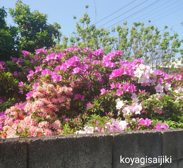 f:id:koyagi-saijiki:20180422113647j:image