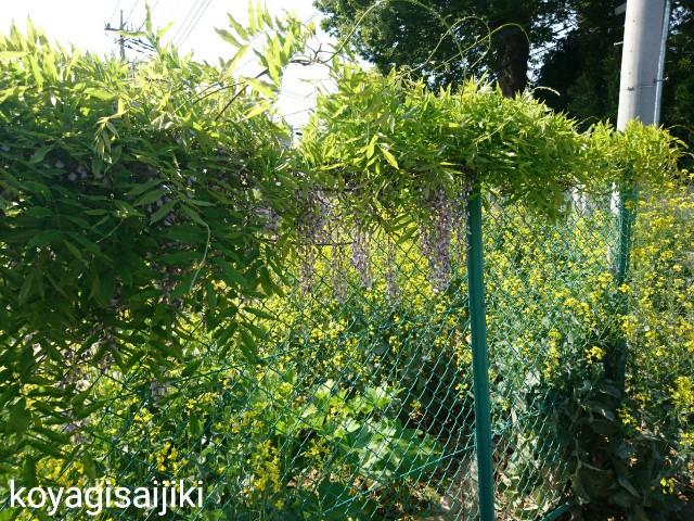 f:id:koyagi-saijiki:20180423064944j:image