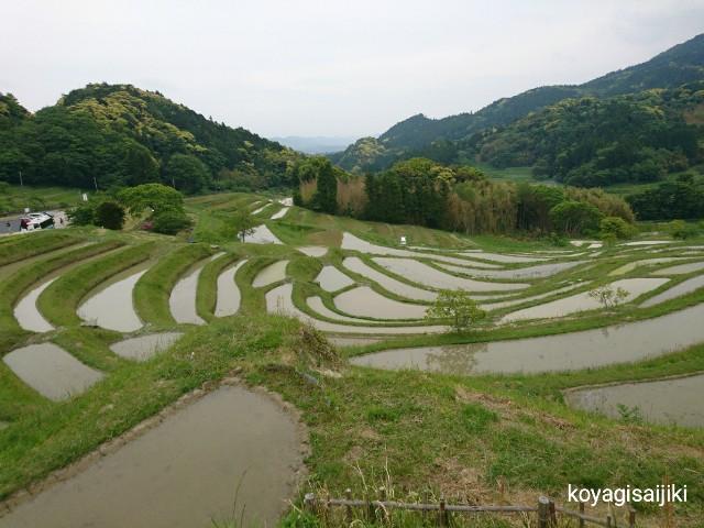 f:id:koyagi-saijiki:20180507095854j:image