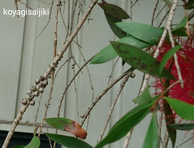 f:id:koyagi-saijiki:20180517133159j:image