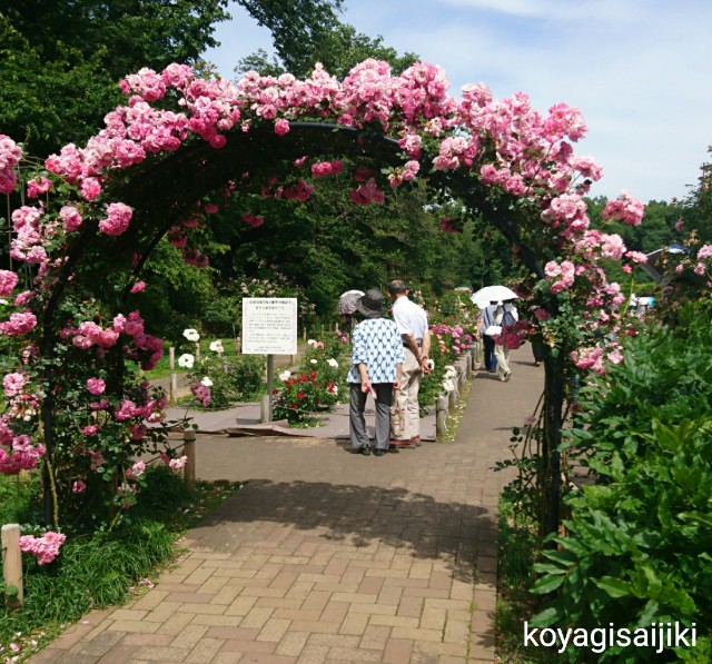 f:id:koyagi-saijiki:20180528142210j:image
