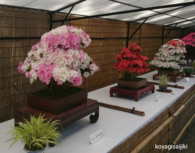 f:id:koyagi-saijiki:20180528145649j:image