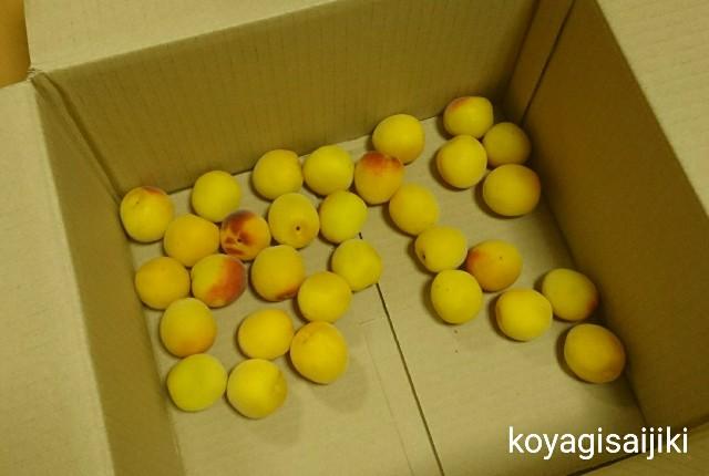 f:id:koyagi-saijiki:20180629135151j:image
