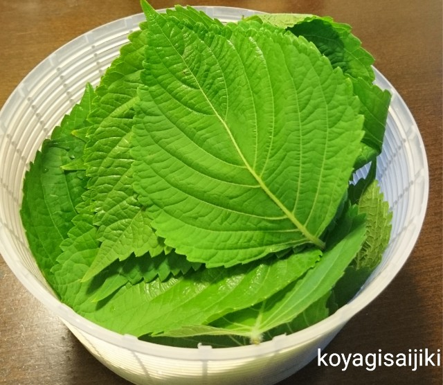 f:id:koyagi-saijiki:20180725104250j:image
