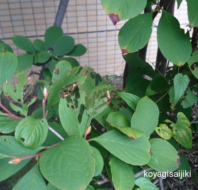 f:id:koyagi-saijiki:20180901083925j:image