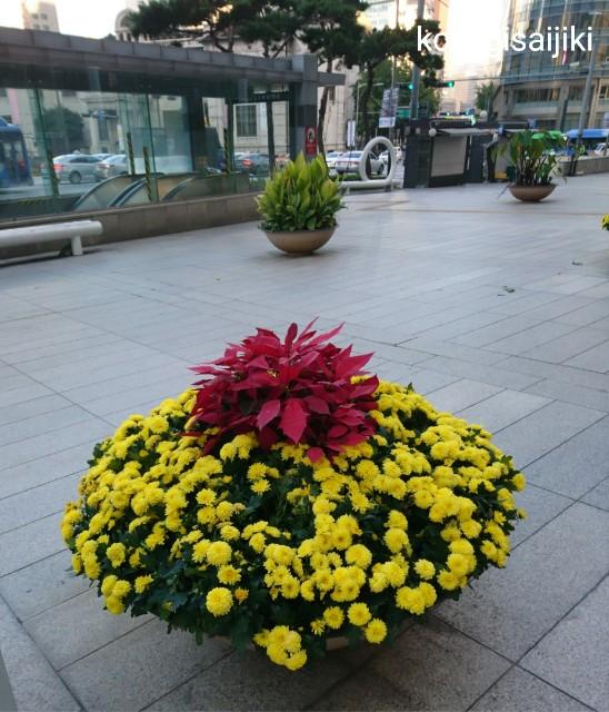 f:id:koyagi-saijiki:20181004152307j:image