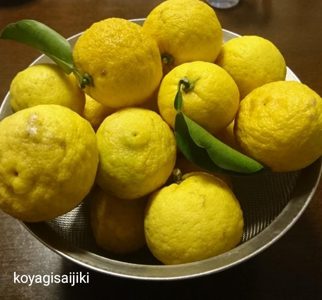 f:id:koyagi-saijiki:20181127231117j:image