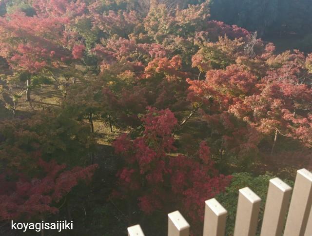 f:id:koyagi-saijiki:20181128105916j:image